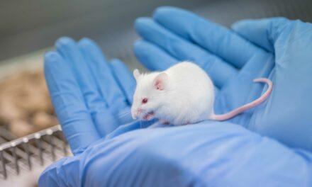 Tierversuche ersetzen, reduzieren und verbessern: Universität Ulm am landesweiten 3R-Netzwerk beteiligt